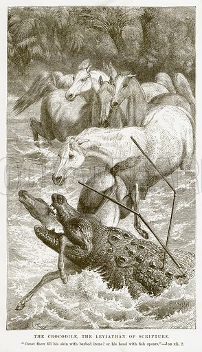 The Crocodile the Leviathan of Scripture. Illustration for Bible Animals by JG Wood (Longmans, 1876).