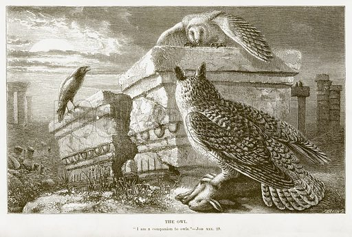 The Owl. Illustration for Bible Animals by JG Wood (Longmans, 1876).
