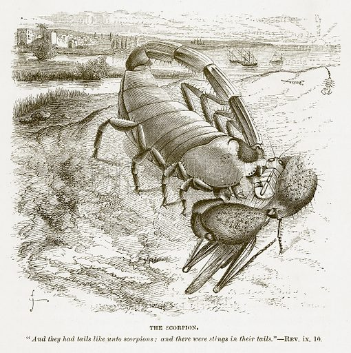 The Scorpion. Illustration for Bible Animals by JG Wood (Longmans, 1876).