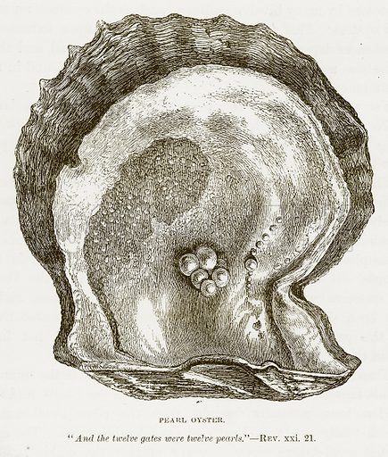 Pearl Oyster. Illustration for Bible Animals by JG Wood (Longmans, 1876).