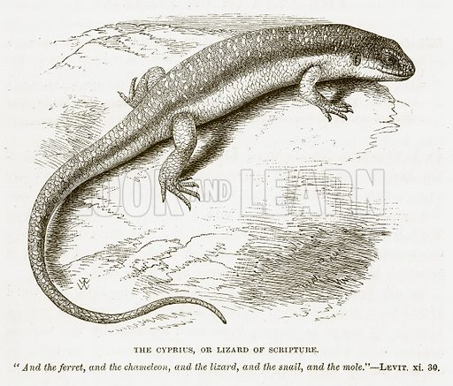 The Cyprius, or Lizard of Scripture. Illustration for Bible Animals by JG Wood (Longmans, 1876).