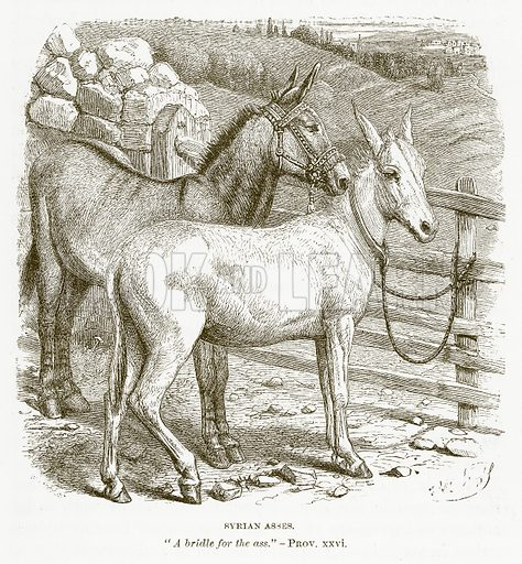 Syrian Asses. Illustration for Bible Animals by JG Wood (Longmans, 1876).