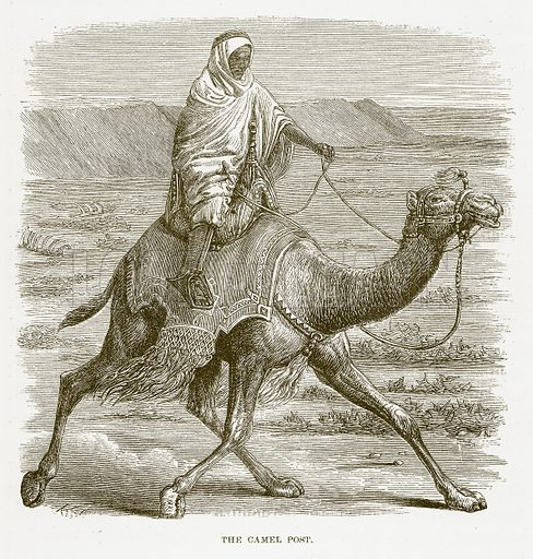 The Camel Post. Illustration for Bible Animals by JG Wood (Longmans, 1876).