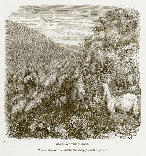 Goats on the March. Illustration for Bible Animals by JG Wood (Longmans, 1876).