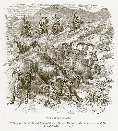 The Aoudad Chased. Illustration for Bible Animals by JG Wood (Longmans, 1876).