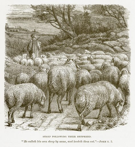 Sheep following their Shepherd. Illustration for Bible Animals by JG Wood (Longmans, 1876).