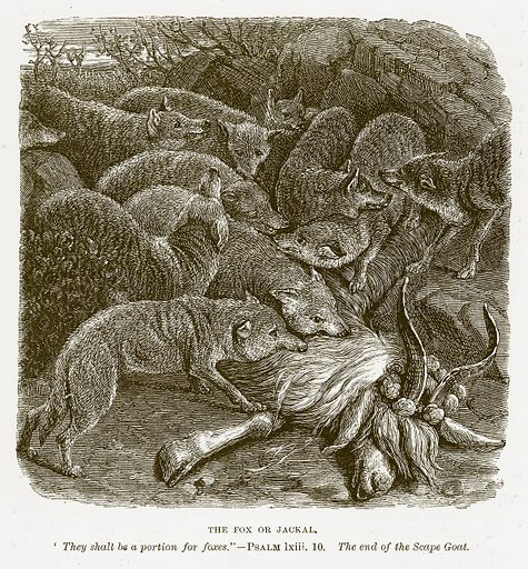 The Fox or Jackal. Illustration for Bible Animals by JG Wood (Longmans, 1876).