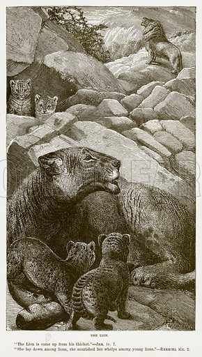 The Lion. Illustration for Bible Animals by JG Wood (Longmans, 1876).