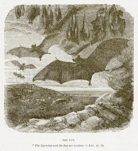 The Bat. Illustration for Bible Animals by JG Wood (Longmans, 1876).