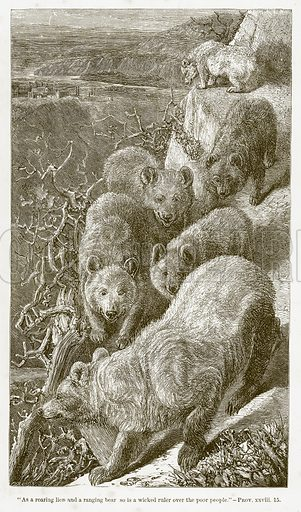 Bears. Illustration for Bible Animals by JG Wood (Longmans, 1876).