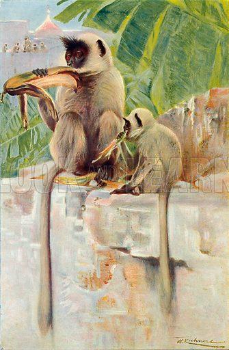 Hanuman Monkeys