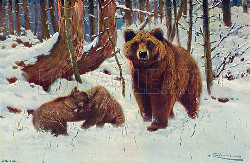 Brown Bear and Cubs. Illustration for the Harmsworth Natural History (1911).
