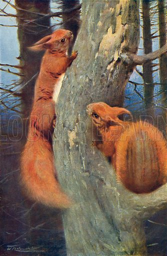 European Squirrels. Illustration for the Harmsworth Natural History (1911).