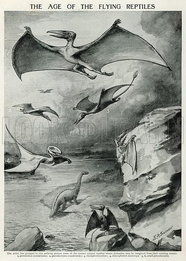 The Age of the Flying Reptiles. Illustration for the Harmsworth Natural History (1911).