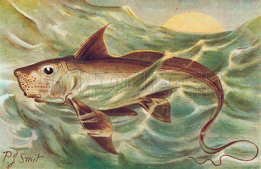 Chimaera. Illustration for the Harmsworth Natural History (1911).