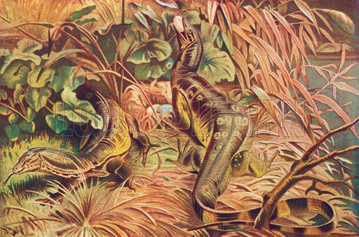 Water-Monitors. Illustration for the Harmsworth Natural History (1911).