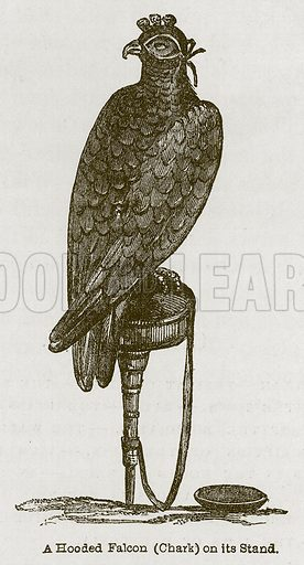A Hooded Falcon (Chark) on its Stand. Illustration for Discoveries in the Ruins of Nineveh and Babylon by Austen Layard (John Murray, 1853).
