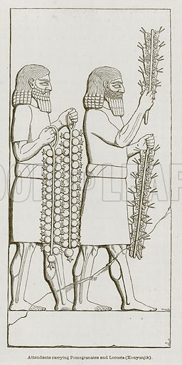 Attendants Carrying Pomegranates and Locusts (Kouyunjik). Illustration for Discoveries in the Ruins of Nineveh and Babylon by Austen Layard (John Murray, 1853).