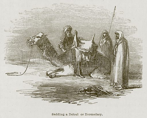 Saddling a Deloul or Dromedary. Illustration for Discoveries in the Ruins of Nineveh and Babylon by Austen Layard (John Murray, 1853).