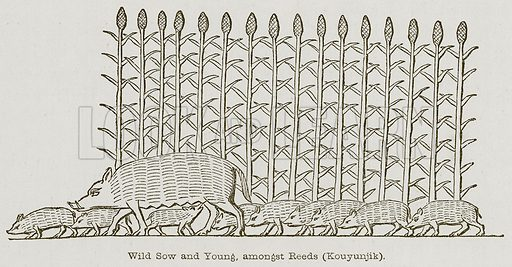 Wild Sow and Young, amongst Reeds (Kouyunjik). Illustration for Discoveries in the Ruins of Nineveh and Babylon by Austen Layard (John Murray, 1853).