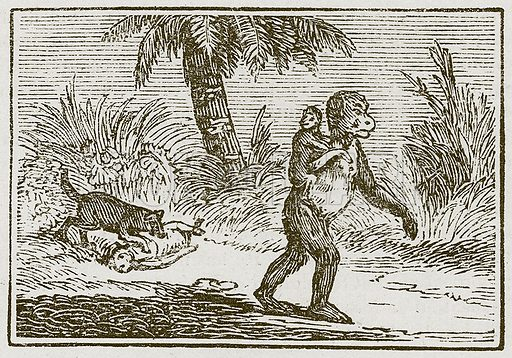 The Ape and her Two Young Ones. Illustration for The Fables of Aesop by Samuel Croxall (Milner & Sowerby, 1860).