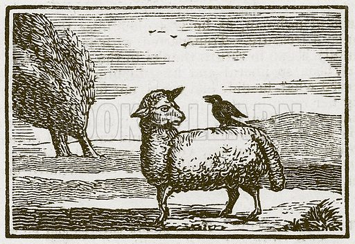 The Jackdaw and the Sheep. Illustration for The Fables of Aesop by Samuel Croxall (Milner & Sowerby, 1860).