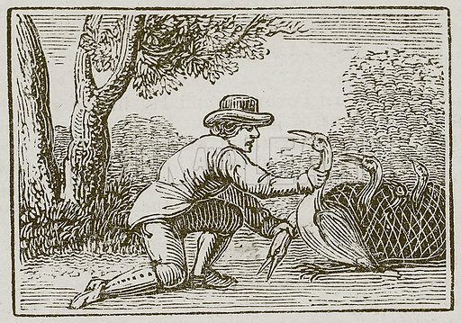 The Husbandman and the Stork. Illustration for The Fables of Aesop by Samuel Croxall (Milner & Sowerby, 1860).
