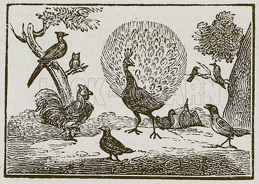 The Peacock and the Magpie. Illustration for The Fables of Aesop by Samuel Croxall (Milner & Sowerby, 1860).