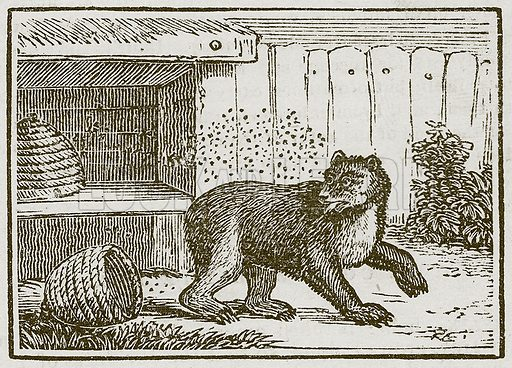 The Bear and the Bee-Hives. Illustration for The Fables of Aesop by Samuel Croxall (Milner & Sowerby, 1860).