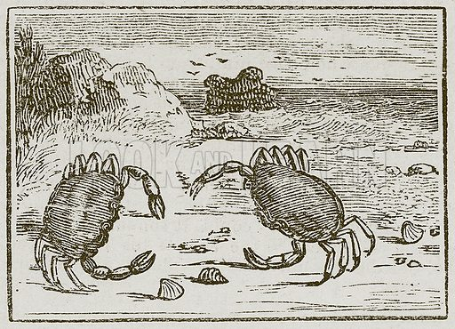 The Two Crabs. Illustration for The Fables of Aesop by Samuel Croxall (Milner & Sowerby, 1860).