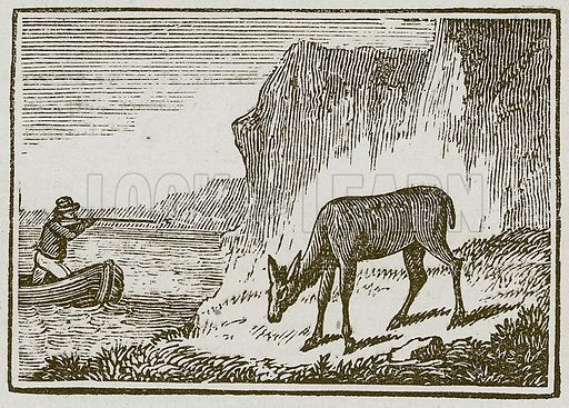The One-Eyed Doe. Illustration for The Fables of Aesop by Samuel Croxall (Milner & Sowerby, 1860).
