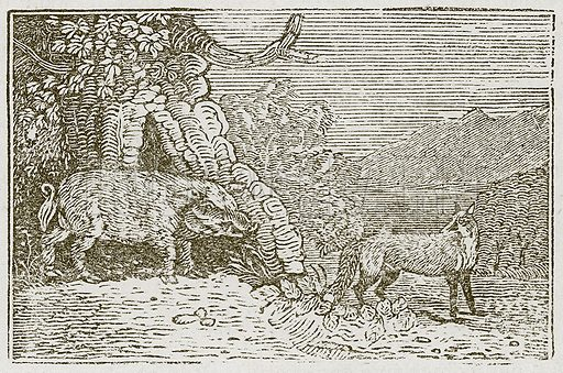 The Fox and the Boar. Illustration for The Fables of Aesop by Samuel Croxall (Milner & Sowerby, 1860).