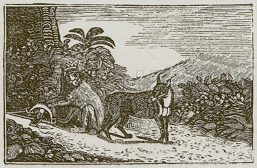 The Fox and the Ape. Illustration for The Fables of Aesop by Samuel Croxall (Milner & Sowerby, 1860).