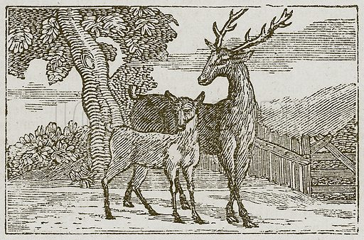 The Stag and the Fawn. Illustration for The Fables of Aesop by Samuel Croxall (Milner & Sowerby, 1860).
