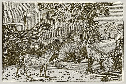The Fox without a Tail. Illustration for The Fables of Aesop by Samuel Croxall (Milner & Sowerby, 1860).
