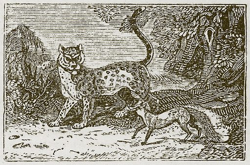 The Leopard and the Fox. Illustration for The Fables of Aesop by Samuel Croxall (Milner & Sowerby, 1860).