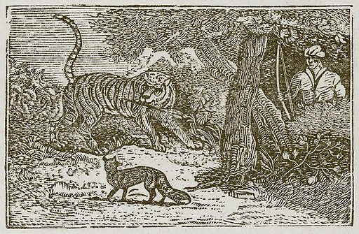 The Fox and the Tiger. Illustration for The Fables of Aesop by Samuel Croxall (Milner & Sowerby, 1860).