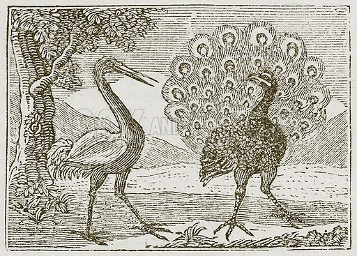 The Peacock and the Crane. Illustration for The Fables of Aesop by Samuel Croxall (Milner & Sowerby, 1860).