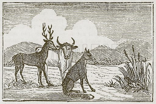 The Frog and the Fox. Illustration for The Fables of Aesop by Samuel Croxall (Milner & Sowerby, 1860).