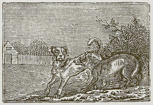 The Dog and the Wolf. Illustration for The Fables of Aesop by Samuel Croxall (Milner & Sowerby, 1860).