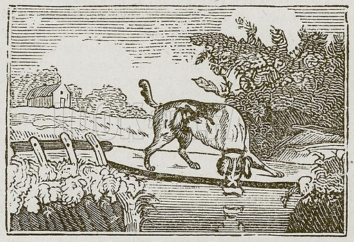 The Dog and the Shadow. Illustration for The Fables of Aesop by Samuel Croxall (Milner & Sowerby, 1860).