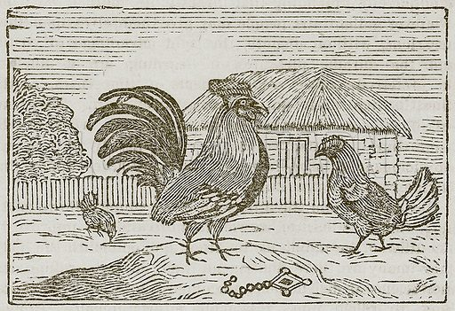 The Cock and the Jewel. Illustration for The Fables of Aesop by Samuel Croxall (Milner & Sowerby, 1860).
