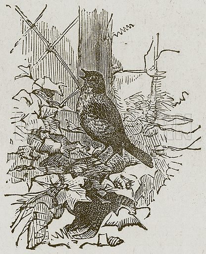 Bird Singing. Illustration for Lessons from Noble Lives (Wesleyan, c 1870).