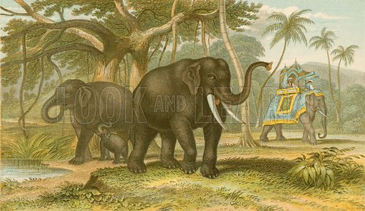 Asiatic elephant. Illustration for Earth and Animated Nature by Oliver Goldsmith (Blackie, 1864).