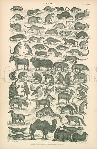Mammals. Illustration for Earth and Animated Nature by Oliver Goldsmith (Blackie, 1864).