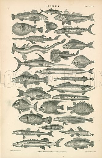Fishes. Illustration for Earth and Animated Nature by Oliver Goldsmith (Blackie, 1864).
