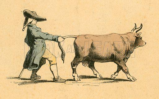 Cow pulling a man. Victorian scrap.