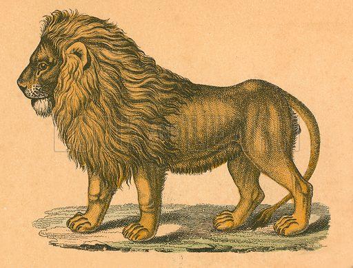 Lion.  Victorian scrap.