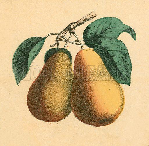 Pears.  Victorian scrap.