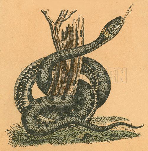 Snake. Victorian scrap.